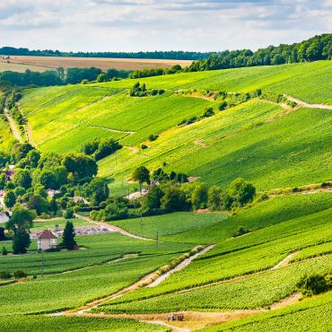 Panorama Vignoble de Champagne - Aisne Tourisme